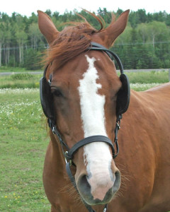 horse blinders What Would Make You Truly Happy?