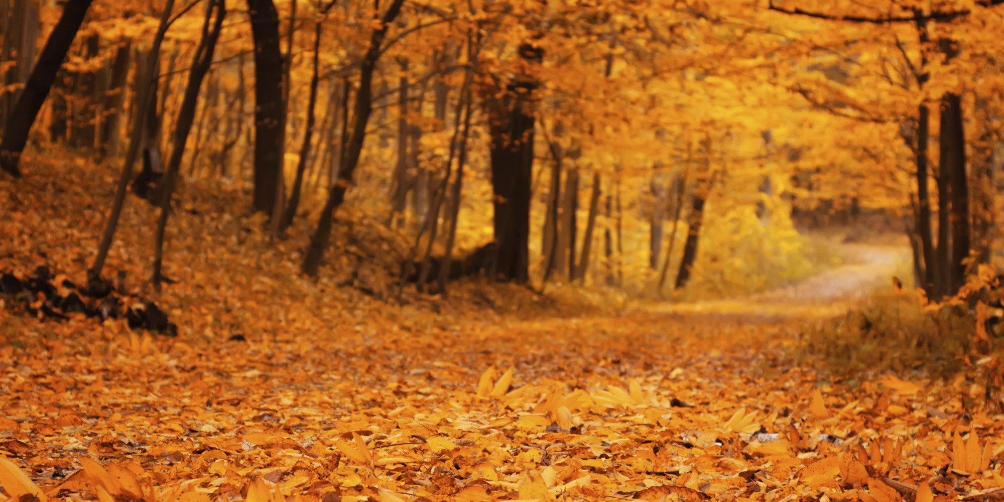 Autumn leaves What Would Make You Truly Happy?